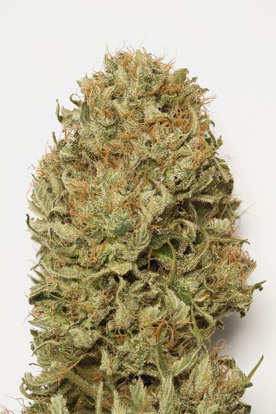 Blue Dream Auto Feminized Marijuana Seeds