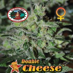 Double Cheese Feminised Seeds