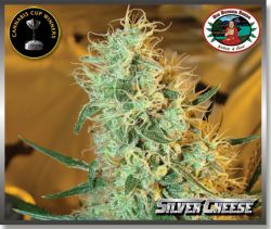 Silver Cheese