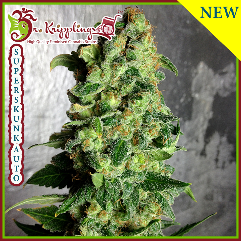 Super Skunk Auto Feminized Marijuana Seeds