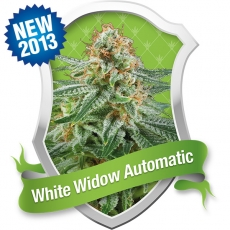 White Widow Automatic Feminized