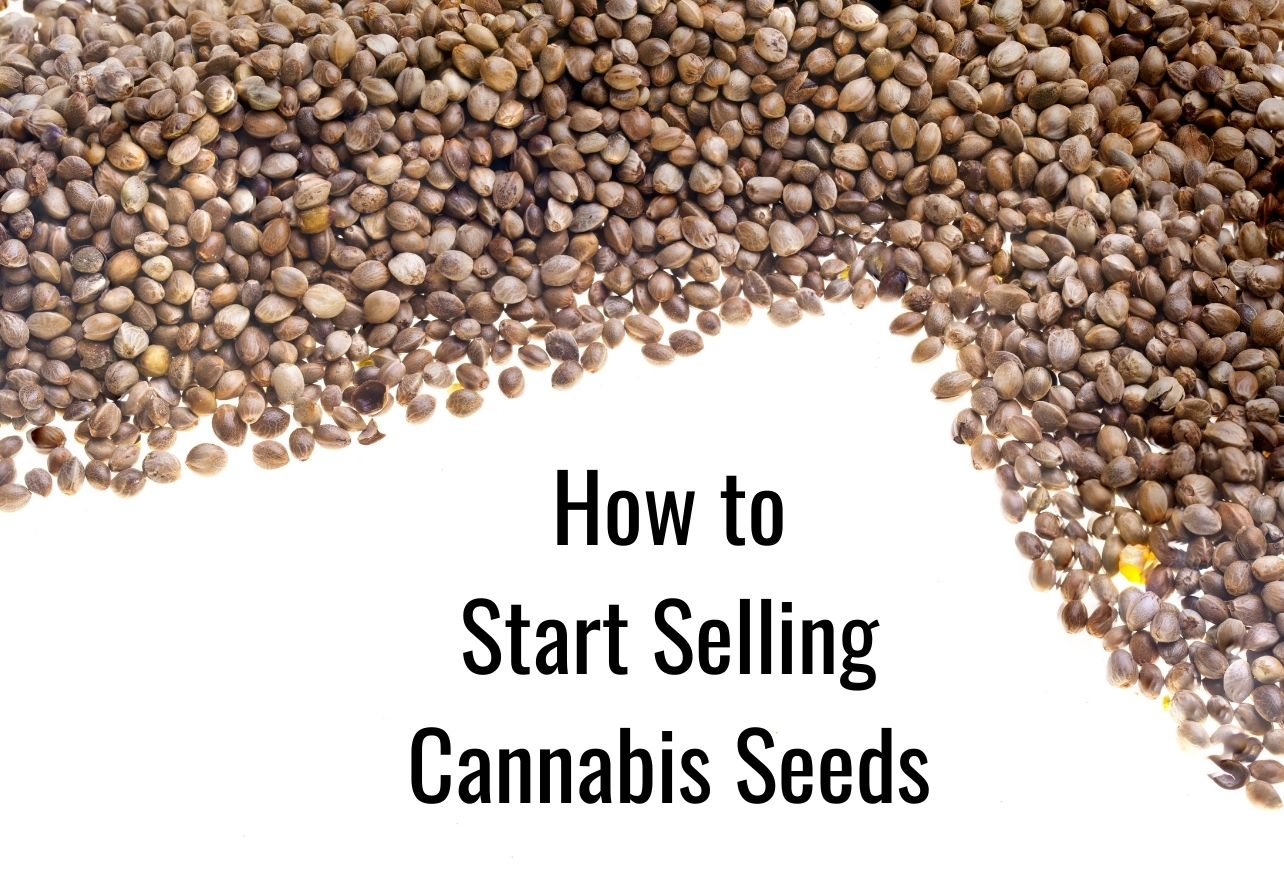 How to Start Selling Cannabis Seeds