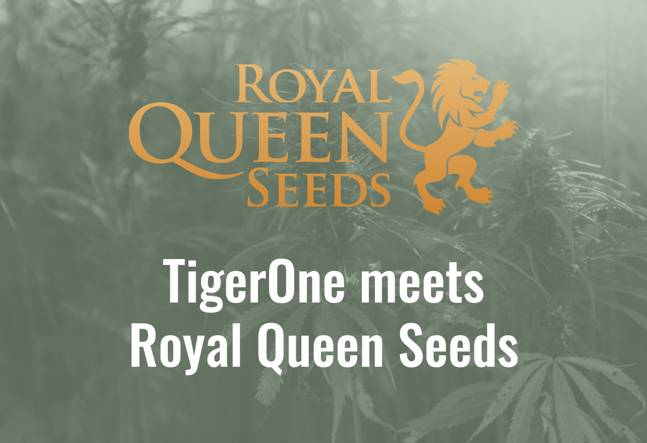 Royal Queen Seeds wholesale