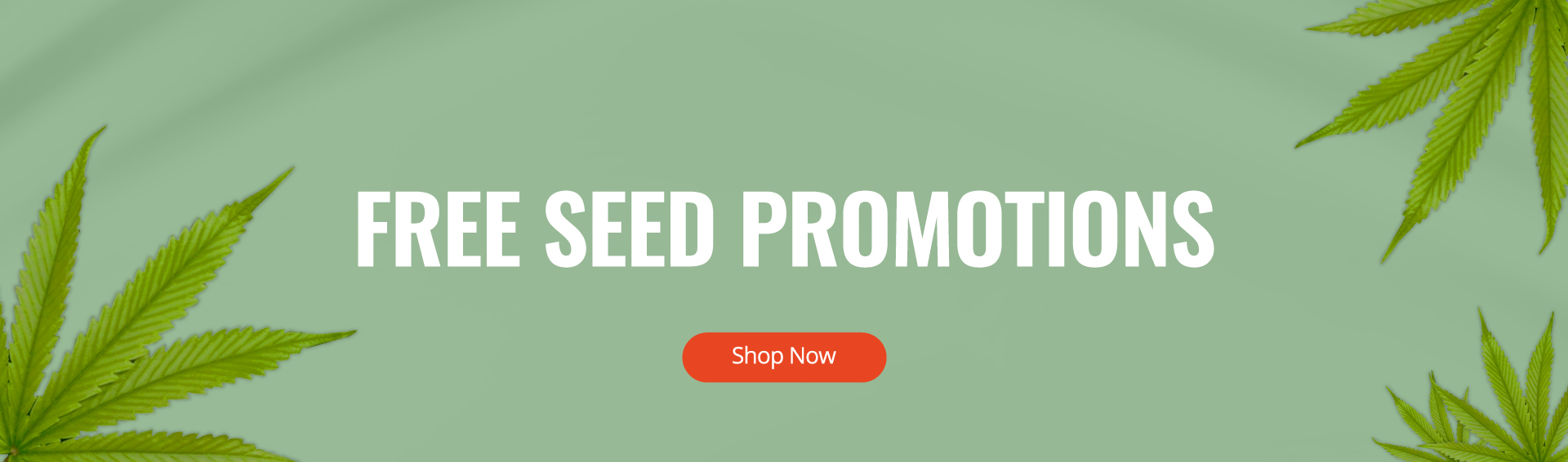 Homepage - Promotions